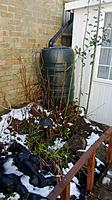 Name: butt.jpg