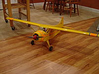 Name: Beaver.jpg