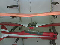 Name: Tuscano-n-Eagle-wing.jpg