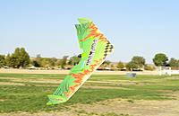 Name: PopWing 1200 12.jpg