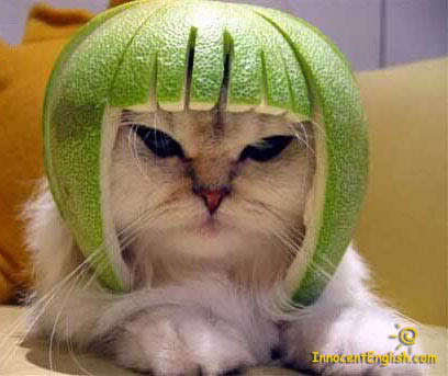 a2945774-179-cat-watermelon-helmet - Watermelon brother - Weird and Extreme