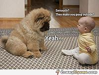 Name: dog-made-poop-outside-funny-baby.jpg