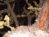 Name: DSCF0777.jpg