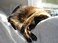 Name: P2170013.jpg