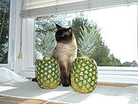 Name: P4040008.jpg
