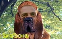 Name: Sean the bloodhound.jpg