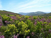 Name: 100_1215.jpg