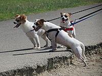 Name: HDV 8-23-14 019.jpg Views: 8 Size: 1.07 MB Description: The Three Amigos