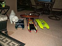 Name: Bella checking out the cats in the yard.jpg