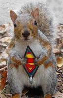 Name: supersquirrel.jpg