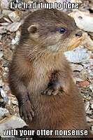 Name: otter.jpg