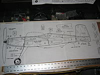 Name: Widgeon 003.jpg
