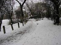 Name: snow4.jpg