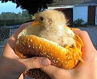 Name: fresh_chicken_sandwitch.jpg