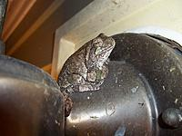 Name: treefrog.jpg