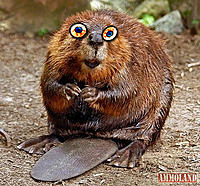 Name: Rabid-Beavers.jpg