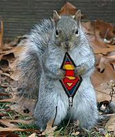 Name: plane retrieving squirrel.jpg