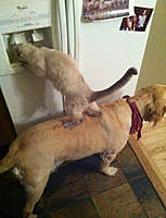 Name: Cat & dog.jpg