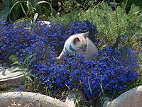 Name: BLUEFO~1.jpg Views: 44 Size: 298.3 KB Description: