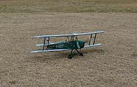 Name: tigermothtaxiing.jpg