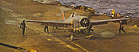 Name: Wildcat-02-px800.jpg