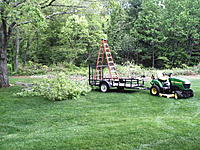 Name: Tree facelift 5-26-11 014.jpg