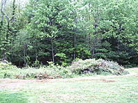 Name: Tree facelift 5-26-11 008.jpg