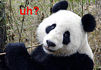 Name: 1292497493858_3panda.jpg