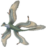 Name: four_winged_dinosaur1.jpg