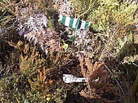 Name: IMG00048-20110910-1250b.jpg