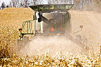 Name: Harvesting-Corn-AG-0024.jpg