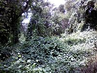 Name: jungle1.jpg