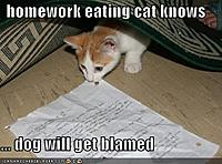 Name: lolcats-homework%20eating%20cat%20knows%20...%20dog%20will%20get%20blamed.jpg
