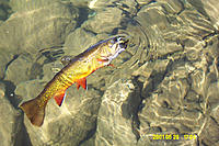 Name: Dcp_0289.jpg