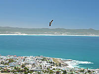 Name: Alula.jpg