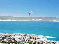 Name: Alula1a.jpg