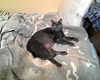Name: gracie 1.jpg