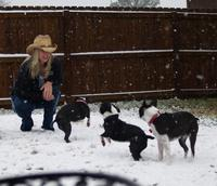 Name: snow day with the dogs (16).jpg
