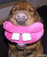 Name: Smiling_Dog.jpg Views: 51 Size: 48.2 KB Description: