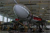 Name: xh558nose.jpg