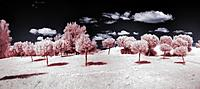 Name: infrared-panorama-2.2.jpg