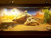 Name: digiii.jpg