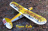 Name: Tiger Cub Painted C.jpeg