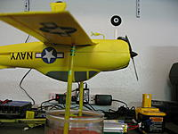 Name: Um Yellow 003.jpg