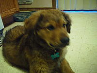 Name: SAM_0321.jpg