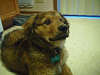 Name: SAM_0322.jpg