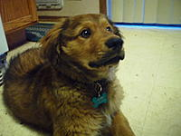 Name: SAM_0323.jpg