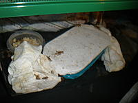 Name: P6230002.jpg
