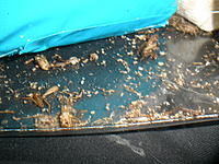 Name: P6230022.jpg