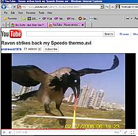 Name: Raven Attack.jpg
